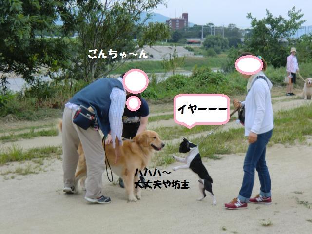 CIMG5236_convert_20120922193108.jpg