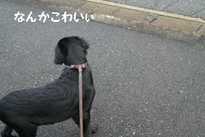 コピー ~ IMG_3923