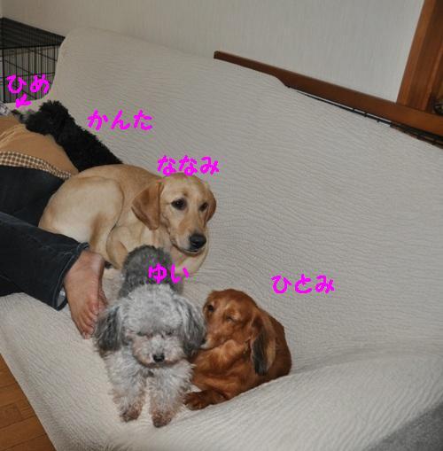 DSC_0001_20100901104544.jpg