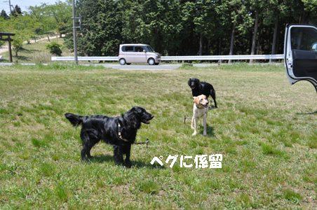 DSC_0002_20110511153145.jpg