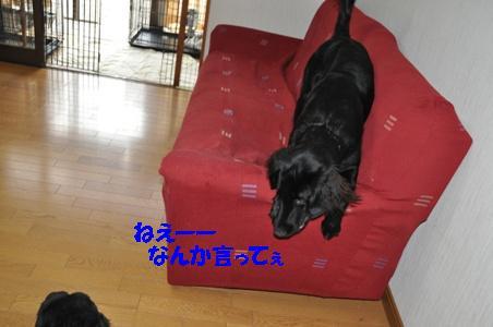 DSC_0005_20101216133445.jpg