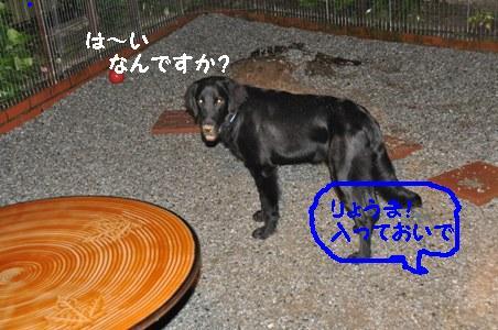 DSC_0010_20100711115721.jpg
