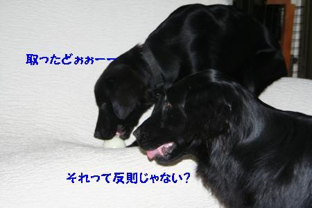 IMG_9423.jpg