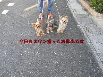 犬 293