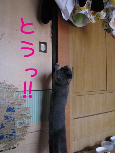 010_Rのコピー