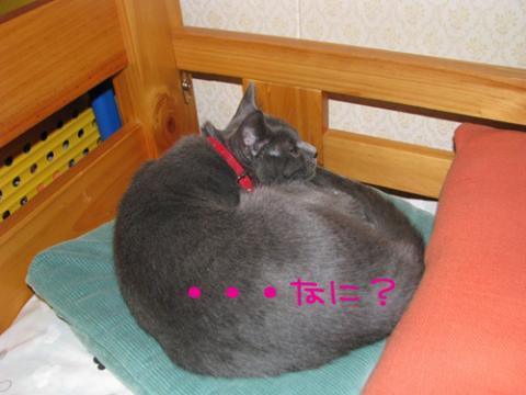 024_Rのコピー
