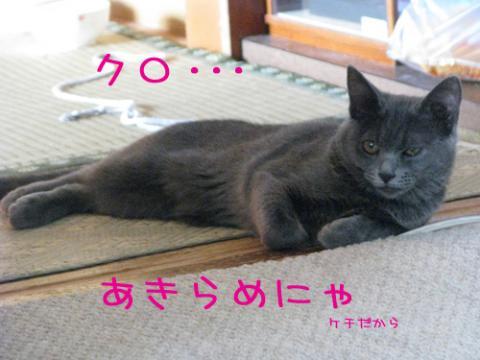 036_Rのコピー