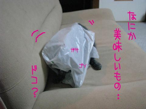 049_Rのコピー