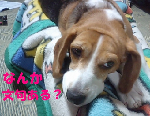 MA320398.jpg