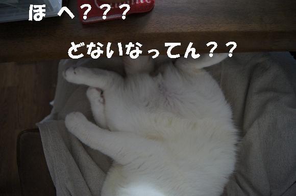 20120427Ⅰ