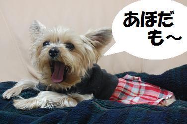 dog113.jpg