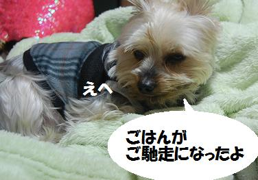 dog114.jpg