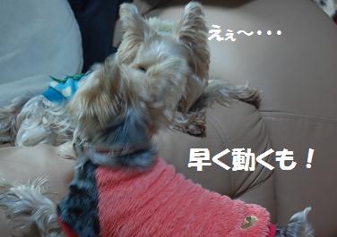 dog122.jpg