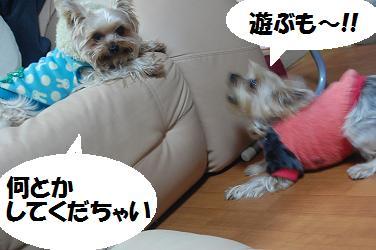 dog123.jpg