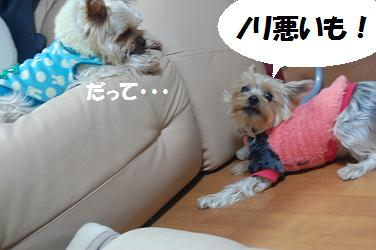 dog124.jpg