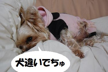 dog126.jpg