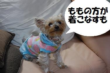 dog127.jpg
