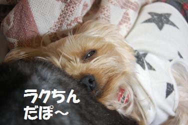 dog129.jpg