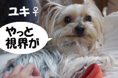 dog137.jpg