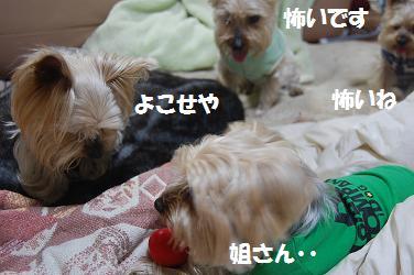 dog142.jpg