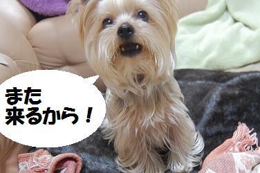 dog144.jpg