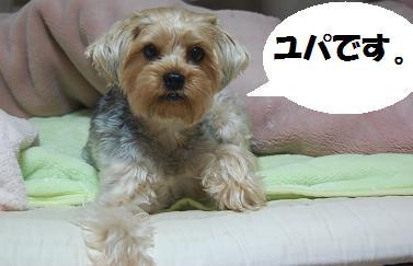 dog145.jpg