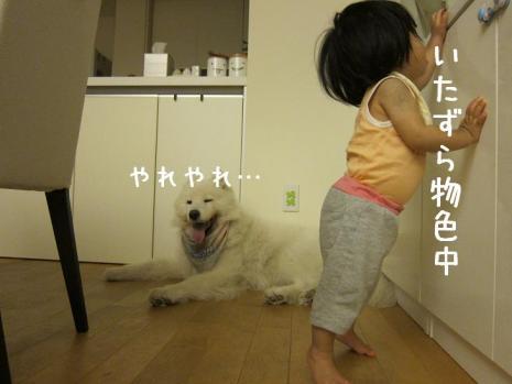 20110819_09.jpg