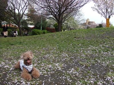 西郷山公園 kuma