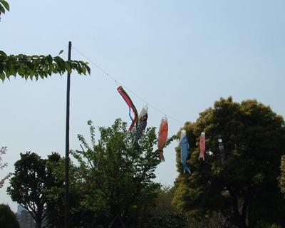 西郷山公園の鯉のぼり