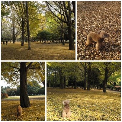 晩秋の代々木公園