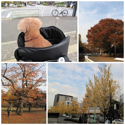 自転車で代々木公園へ