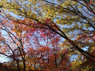 有栖川公園 紅葉