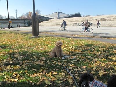 駒沢公園  銀杏