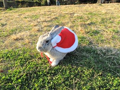 西郷山のウサギ