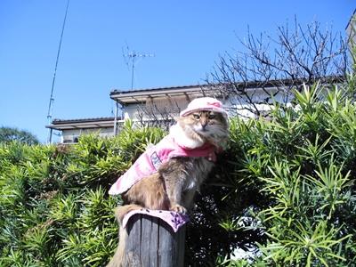 緑道の猫ちゃん
