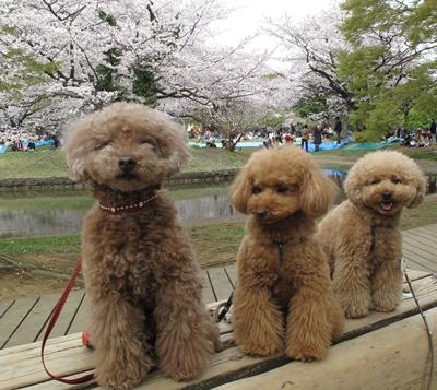 代々木公園お花見散歩 記念写真