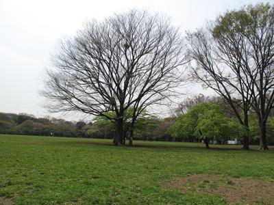 新緑の代々木公園