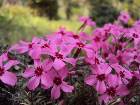 高千穂 花 1