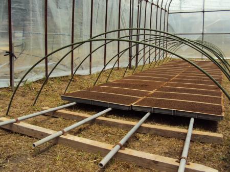 苗床作り 5