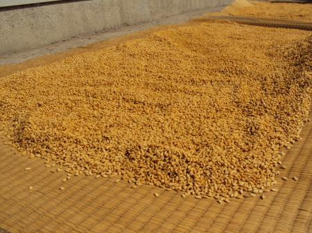 苗床作り 1