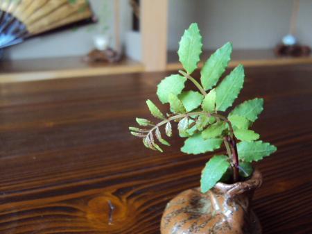 2階 木の芽