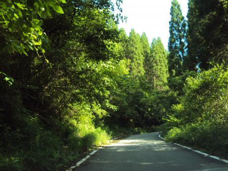 山の道 7月