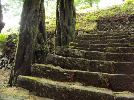 太古の森 階段