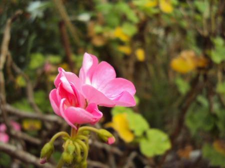 植物KT 3