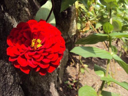 花・赤 3