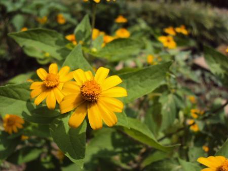 花・黄 1