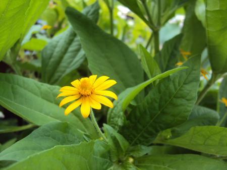 花・黄 2