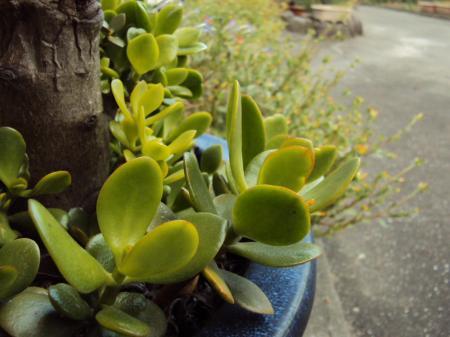 植物KT 1