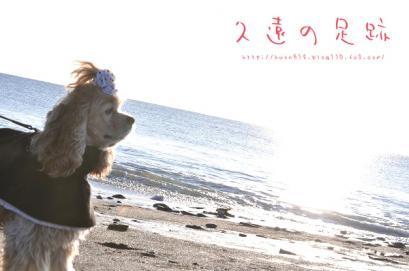 DSC_0161コピー