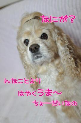 DSC_0825コピー